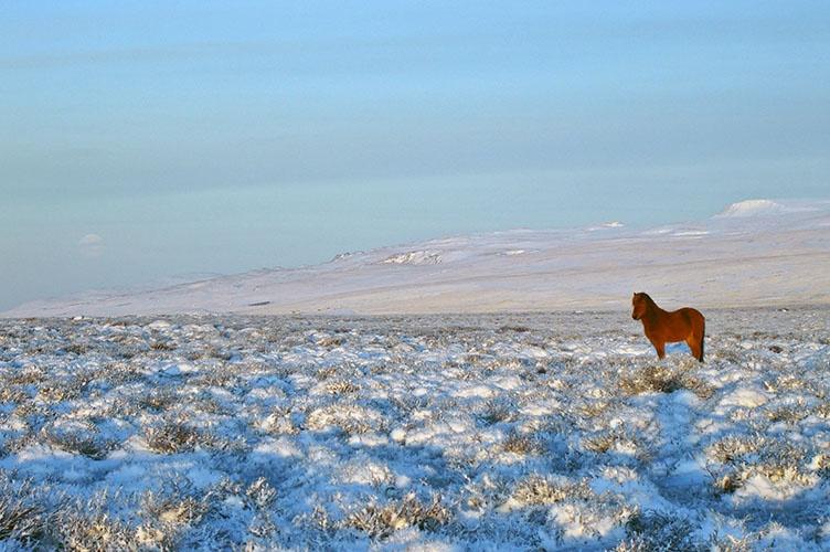 Familienreise im Winter nach Nordisland