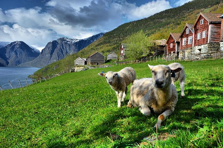 Südnorwegen entdecken - Rundreise mit eigenem Auto und Übernachtung in Ferienhäusern Foto: m_dickson/Foap/Visitnorway.com
