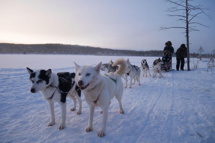 Silvester in Schwedisch Lappland - Familienurlaub Nordschweden