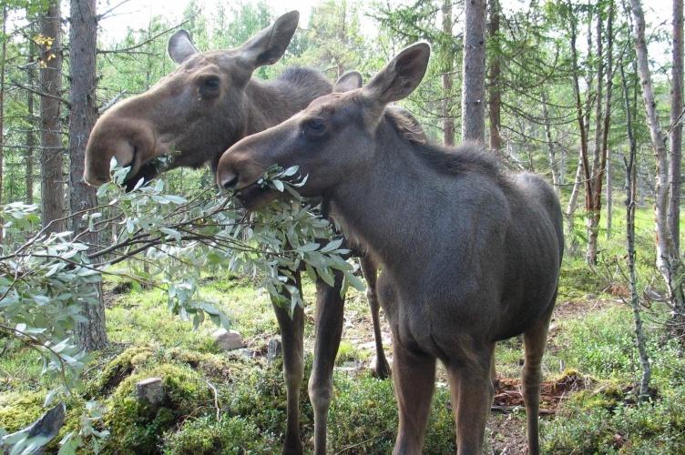Paddeln & Campen in Mittelschweden