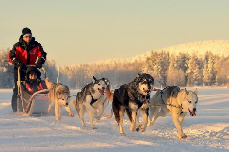 Winterurlaub in Finnland mit dem Hundeschlitten unterwegs