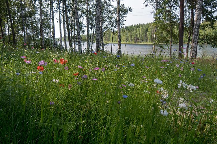 Im Land der 1000 Seen