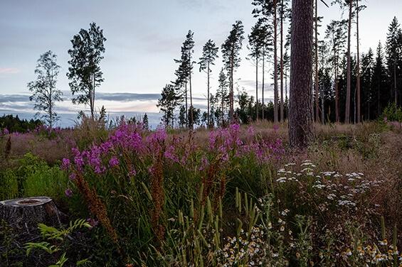 Familienurlaub in der schwedischen Wildnis