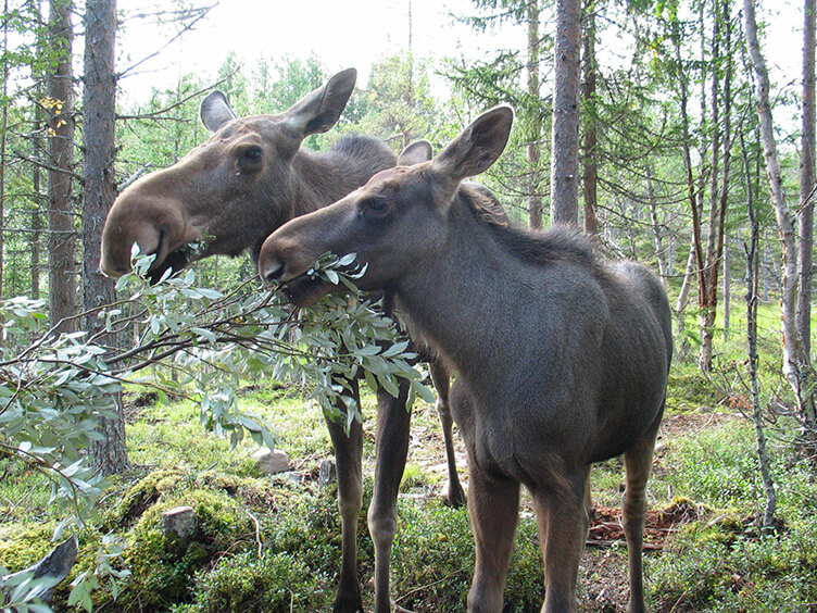 Familienurlaub in der Wildnis