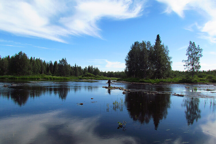Sommerurlaub auf einer Huskyfarm in Südlappland